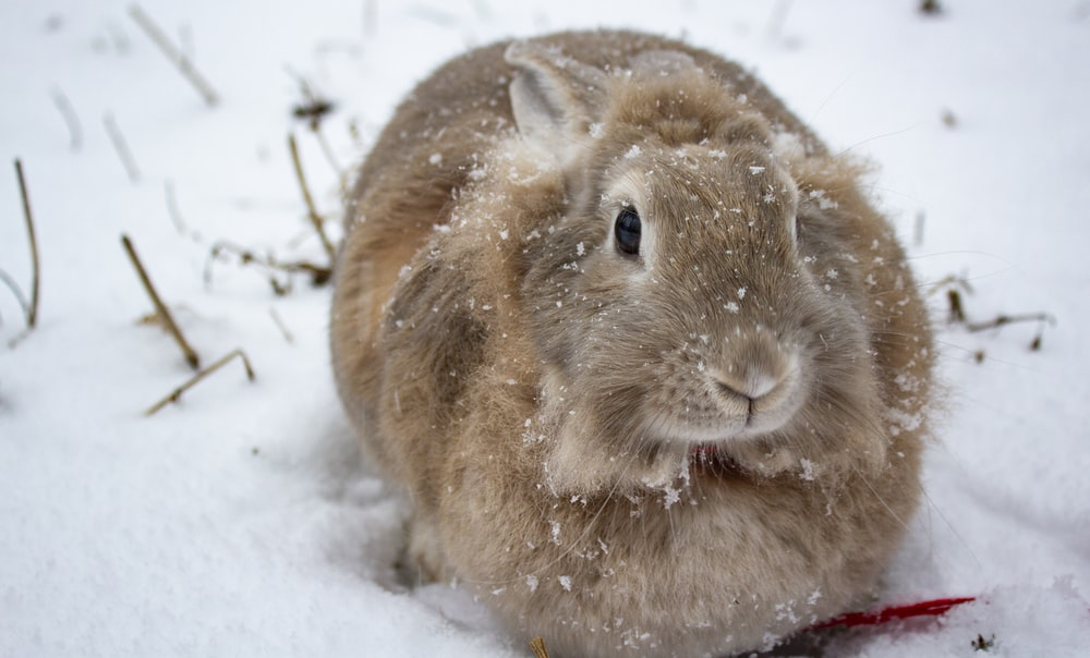 brown rabbit on snow covered ground during daytime