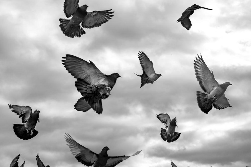 grayscale photo of flock of birds