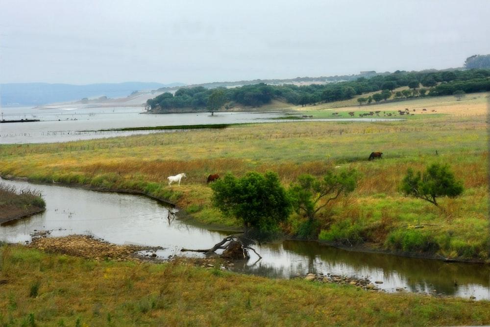 green grass field near lake during daytime