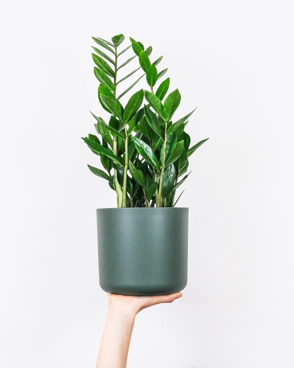 green plant on blue ceramic pot