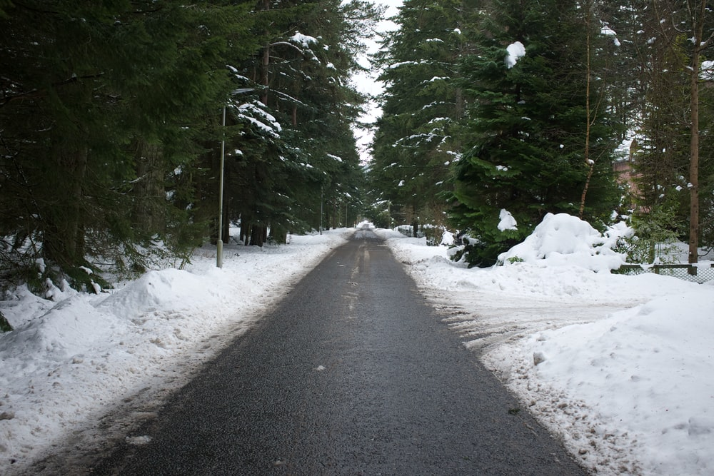 gray road between green trees covered with snow during daytime