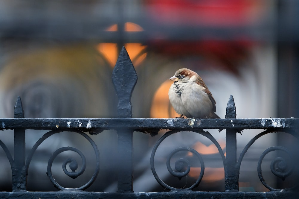 white and brown bird on black metal fence