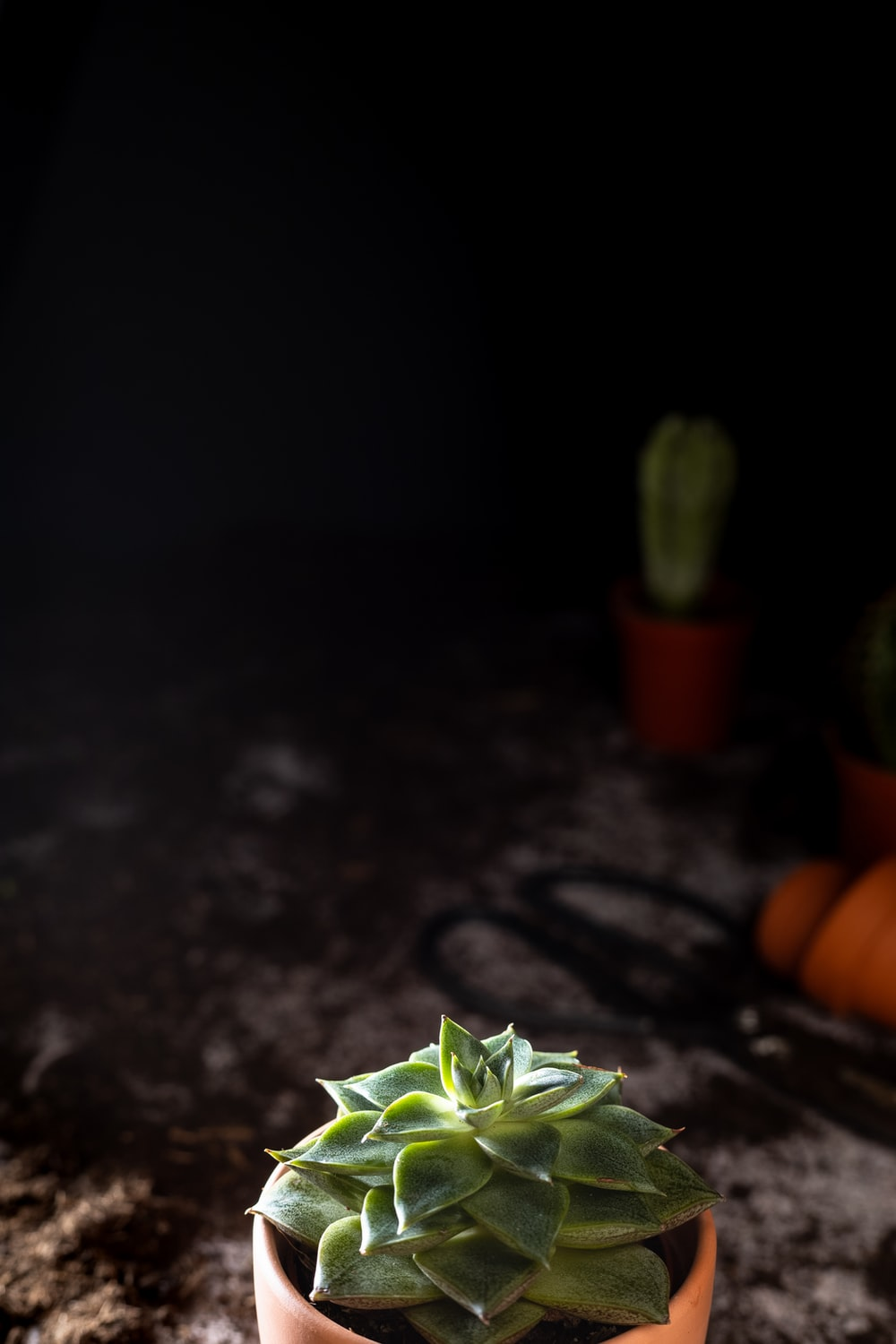 green plant on black table