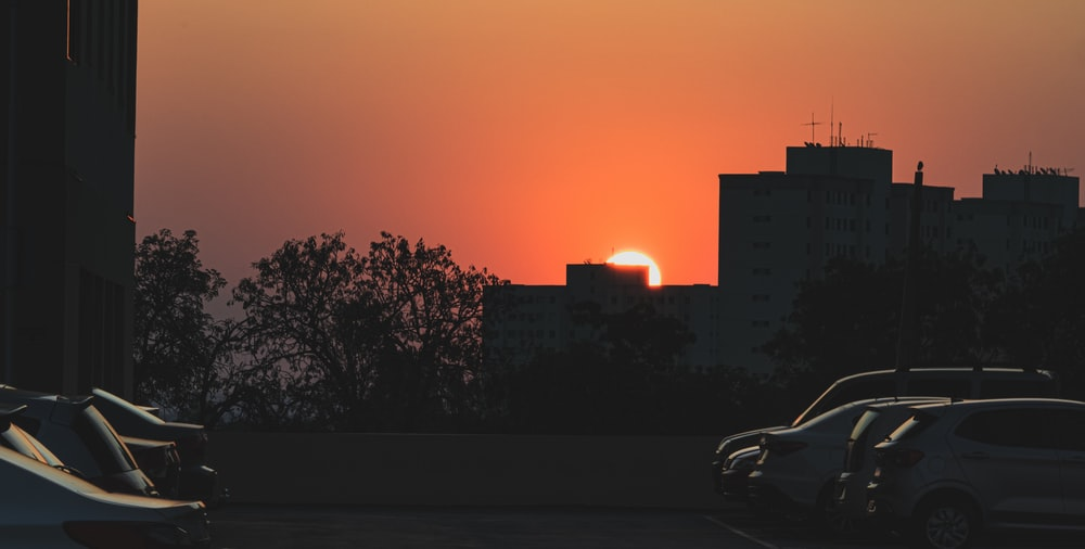 silhouette of trees and city buildings during sunset