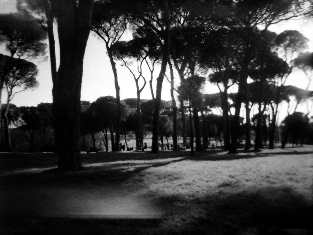 grayscale photo of trees on park