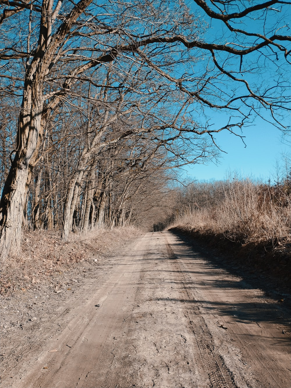 gray road between bare trees during daytime