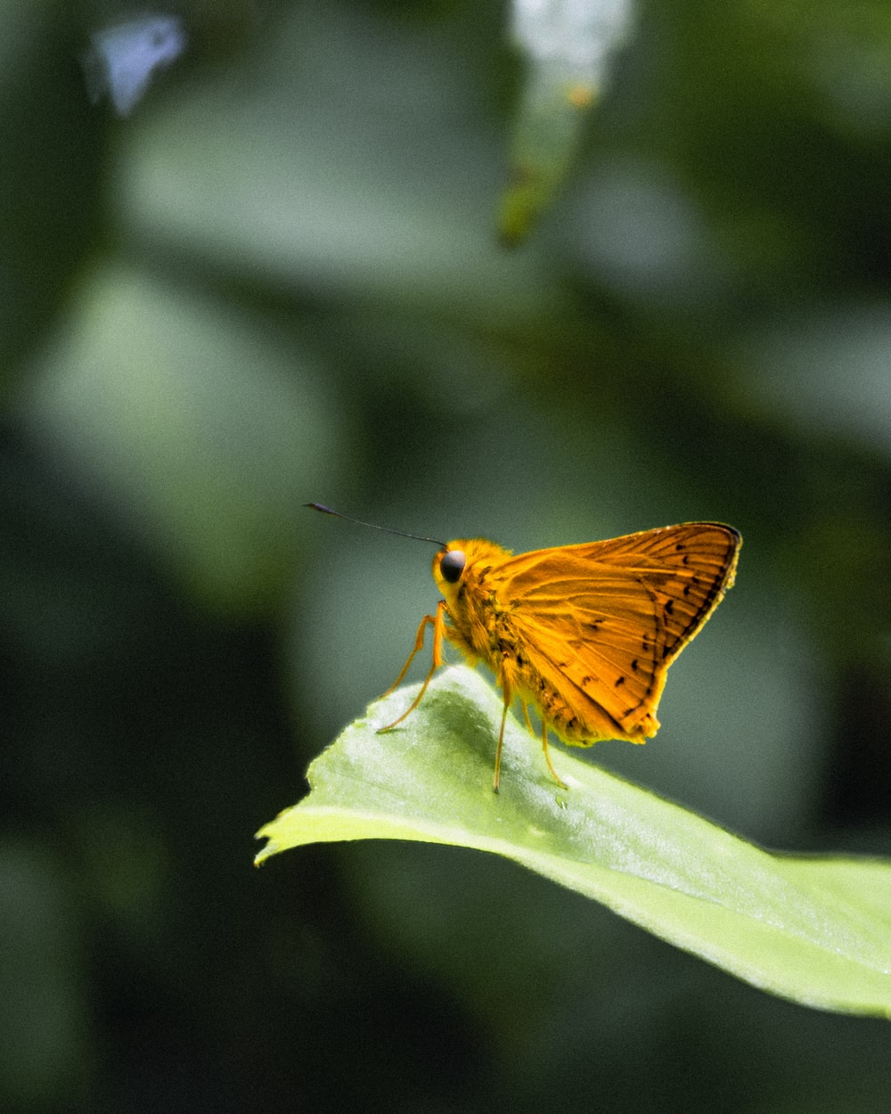 brown butterfly perched on green leaf in close up photography during daytime