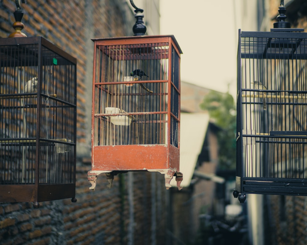 red and black metal bird cage