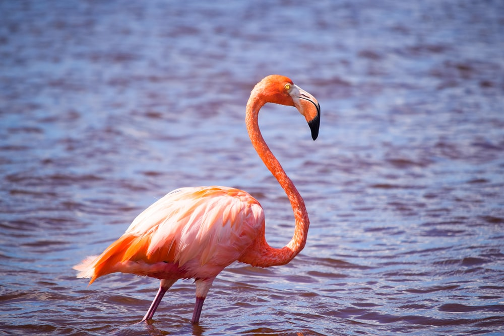 pink flamingo on body of water during daytime