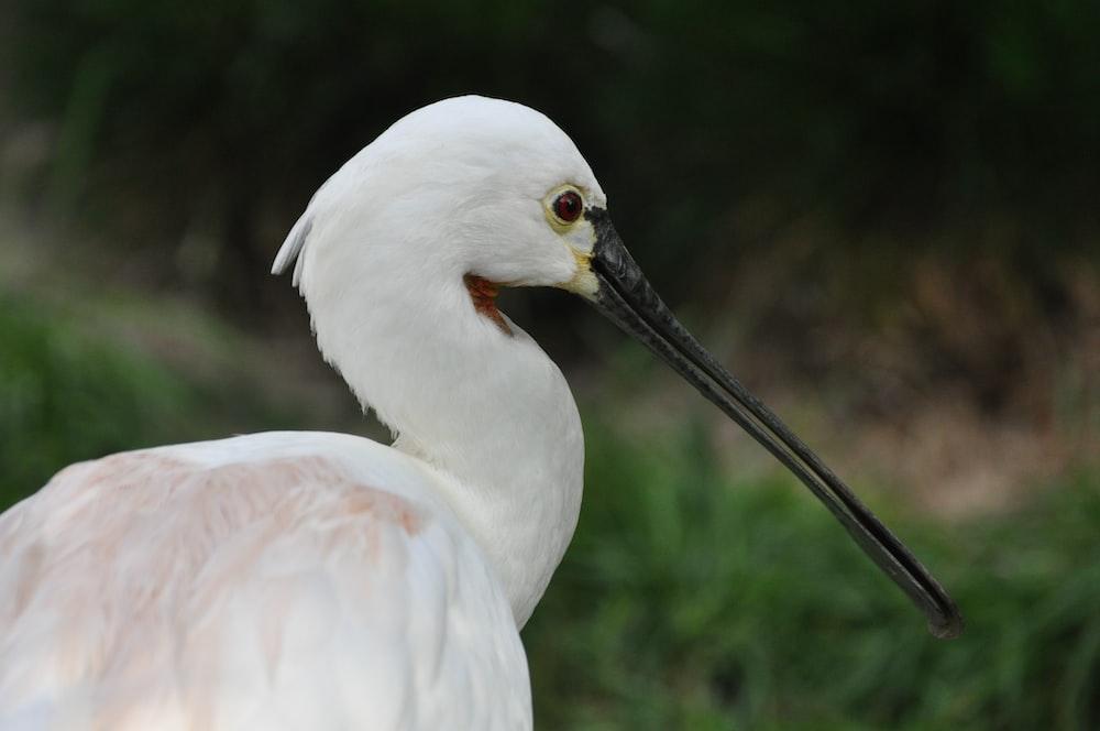 white bird on green grass during daytime