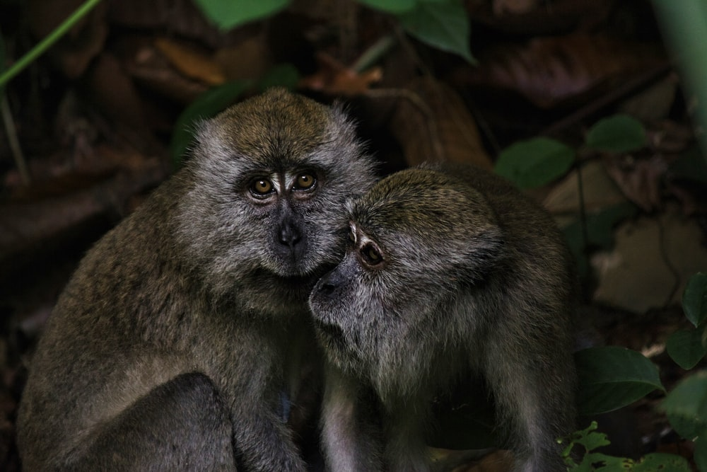 brown monkey on green leaves during daytime