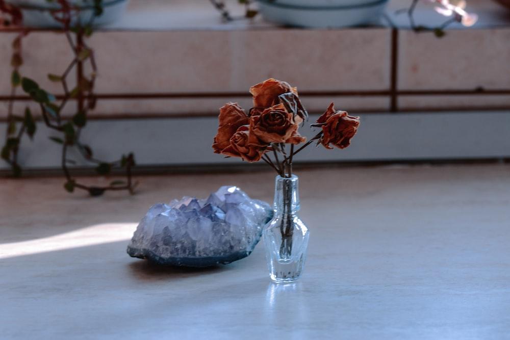 orange roses in clear glass vase