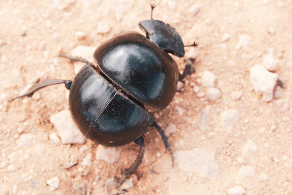 black beetle on brown surface
