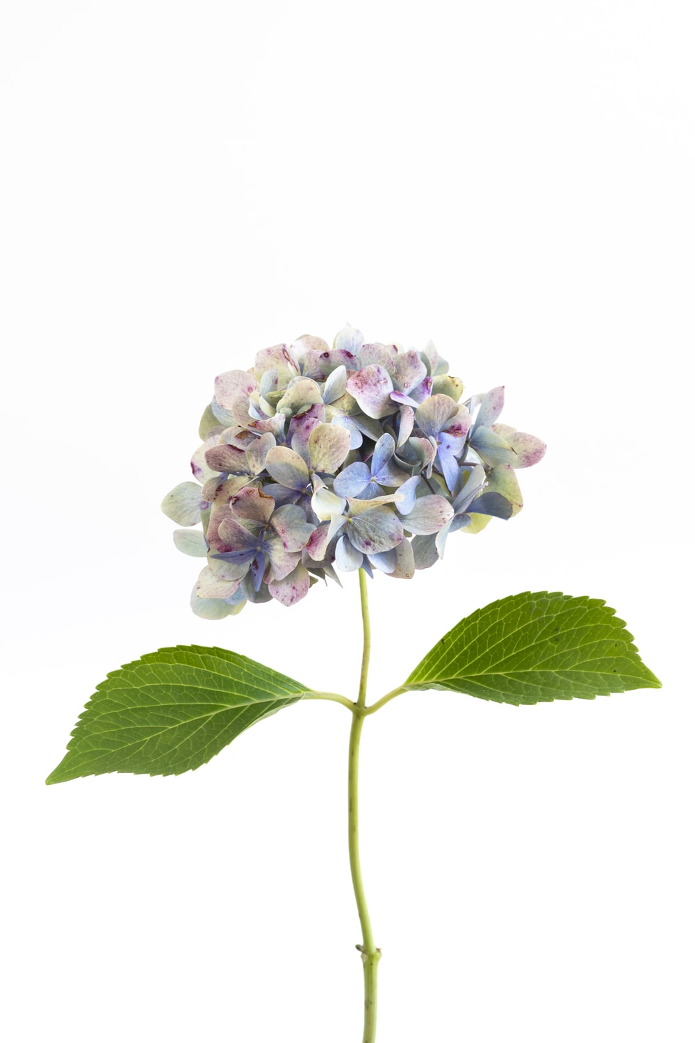 purple and white flower with green leaves
