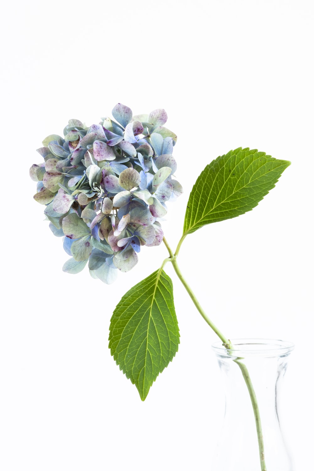 white and purple flower on clear glass vase