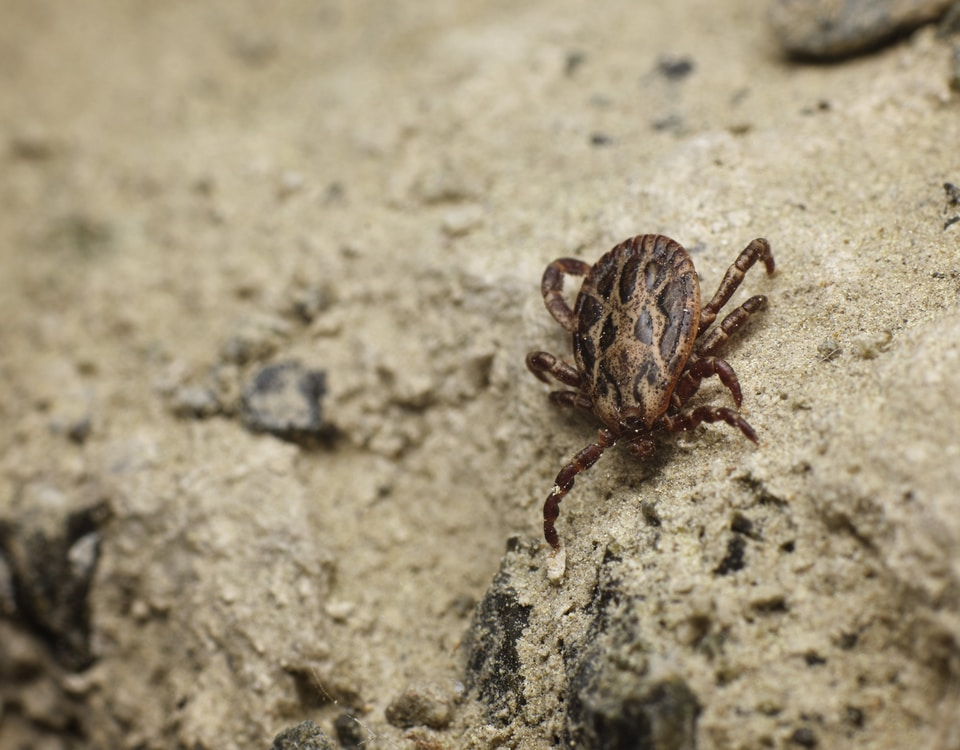 brown and black spider on gray concrete wall