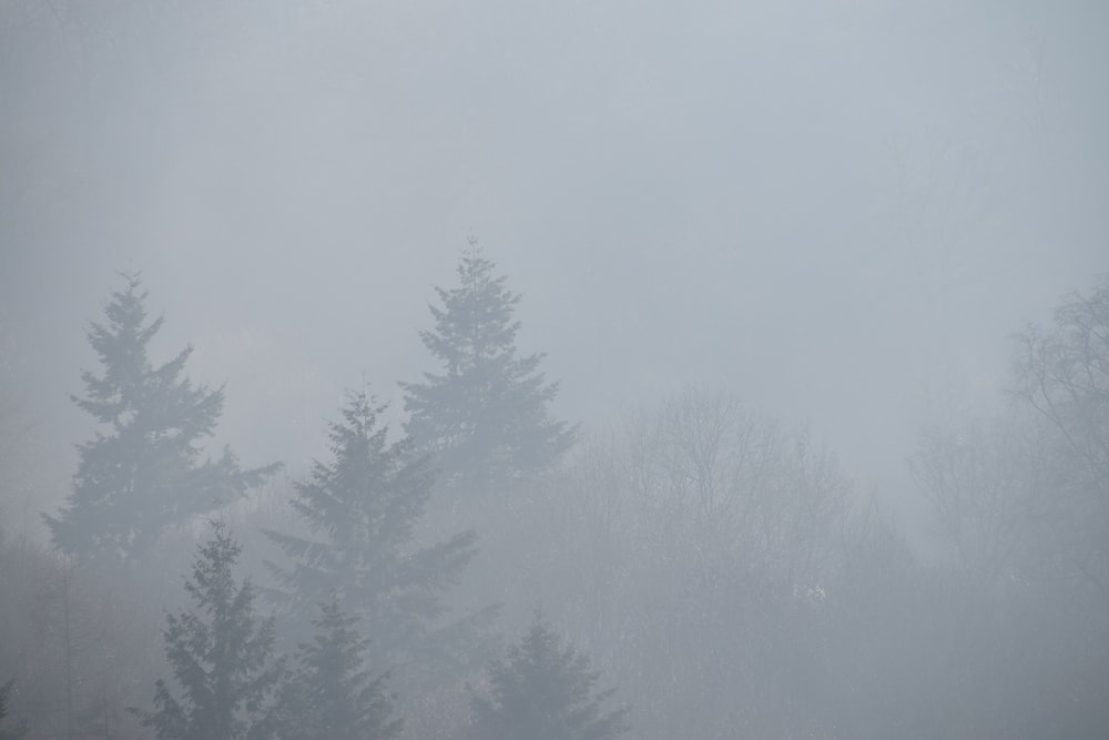 green trees covered with fog