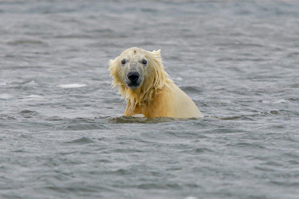 white polar bear on water during daytime