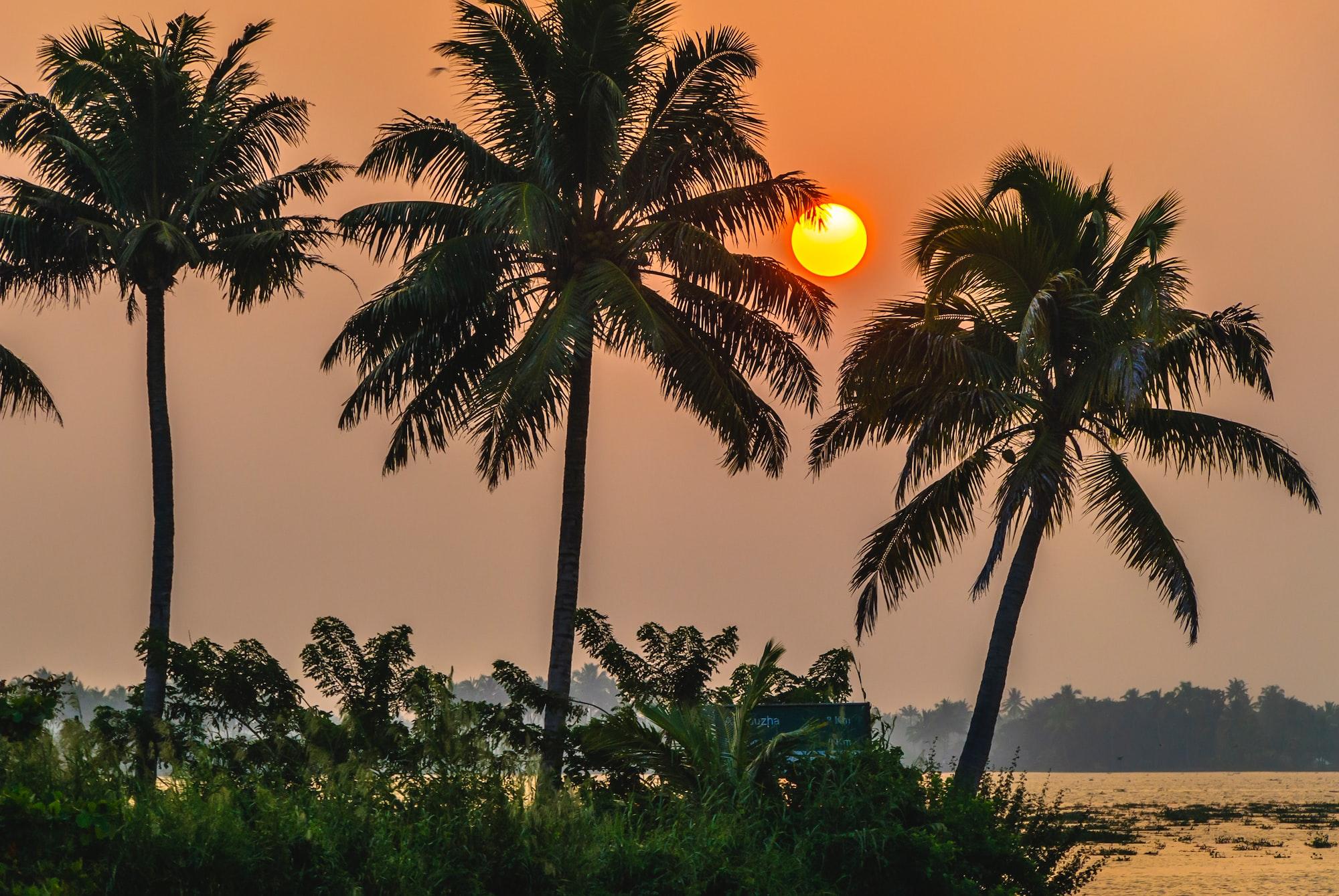 At the Backwaters, Kerala - South India