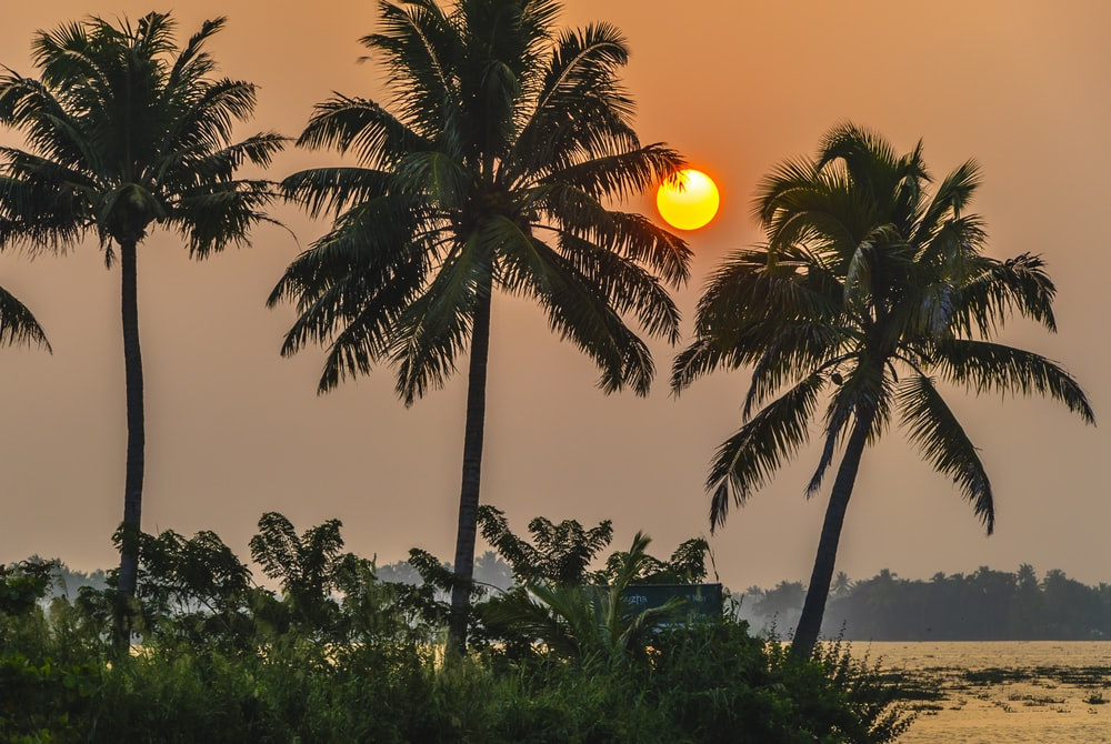 coconut tree during golden hour