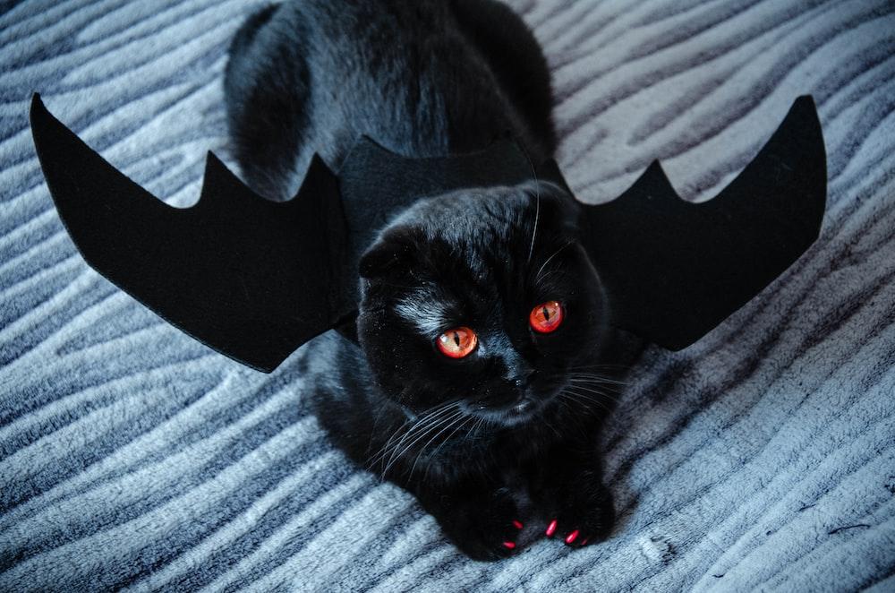 black cat on gray textile