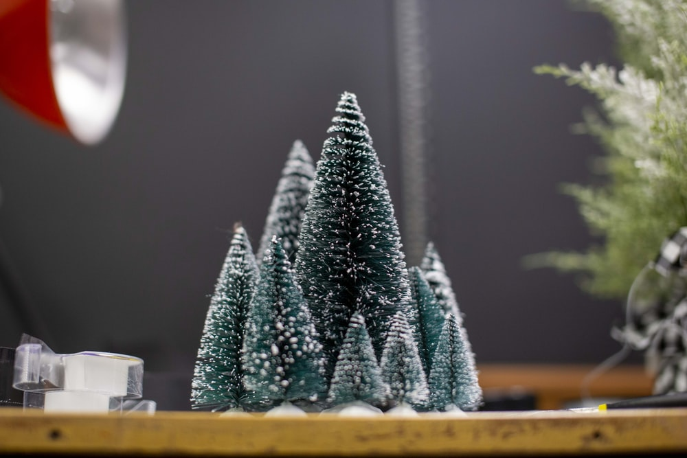 green pine tree on brown wooden table