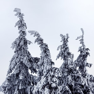 grayscale photo of tree covered with snow