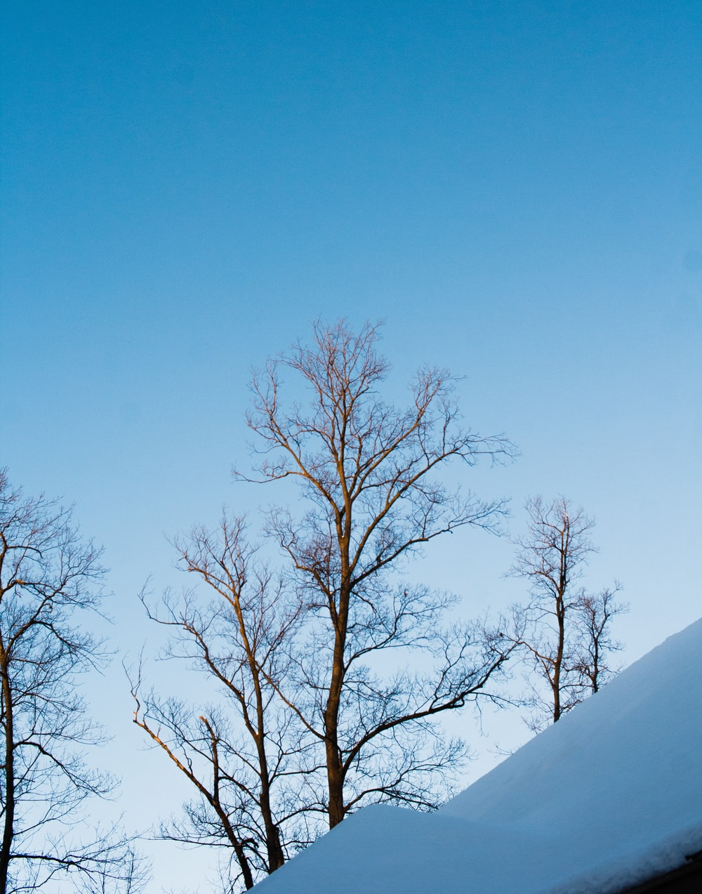 bare tree on snow covered ground under blue sky during daytime