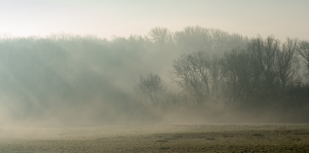 bare trees on brown field covered with fog