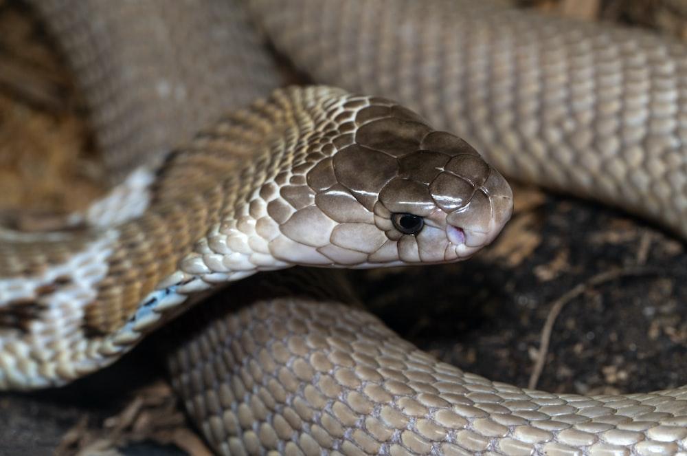 brown and white snake skin