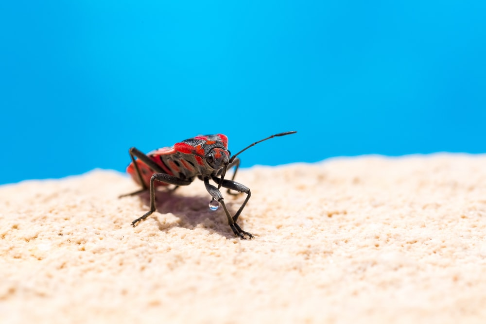 brown and black insect on brown sand during daytime
