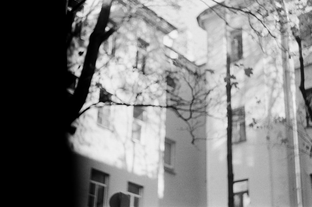 grayscale photo of tree near building
