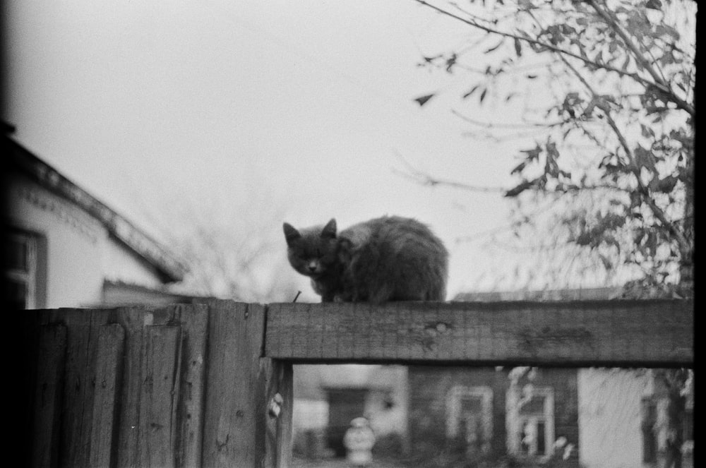 grayscale photo of cat on wooden fence