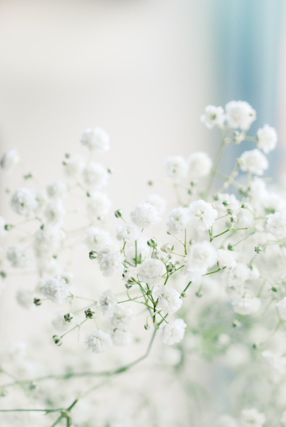 white flowers in macro lens