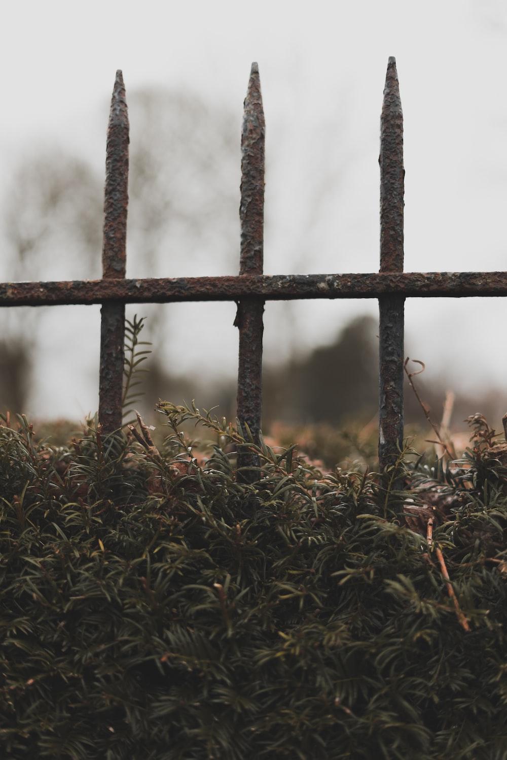 brown grass field near black metal fence