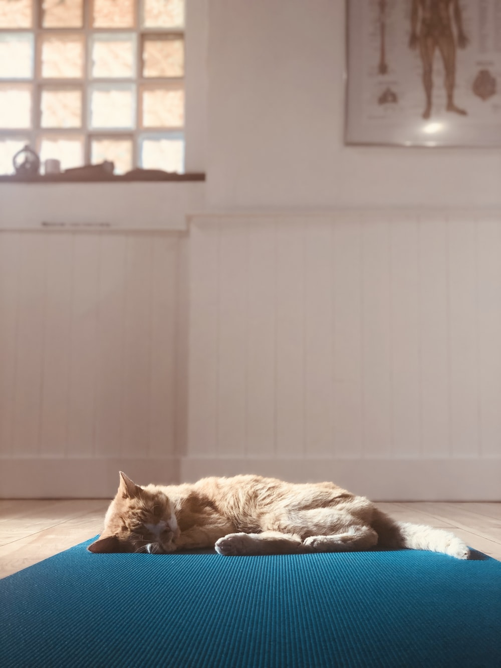 orange tabby cat lying on blue bed