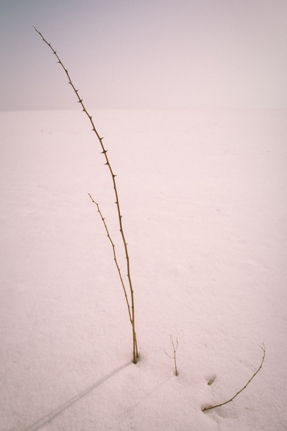 brown leafless tree on white snow covered ground
