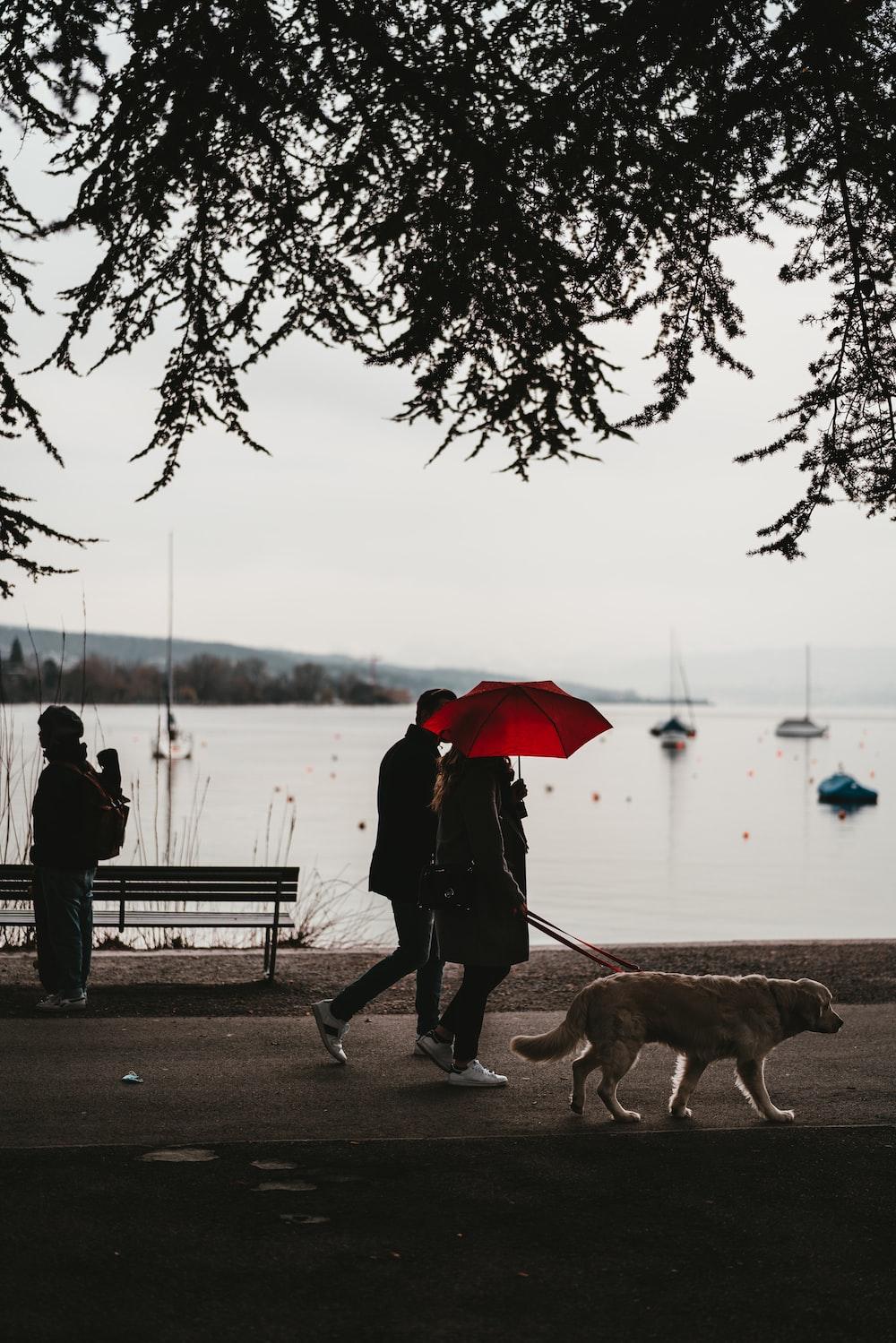 man and woman holding umbrella walking on sidewalk during daytime