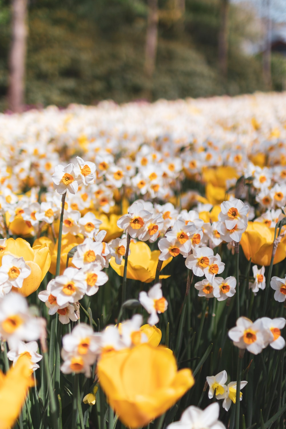 yellow and white flower field during daytime