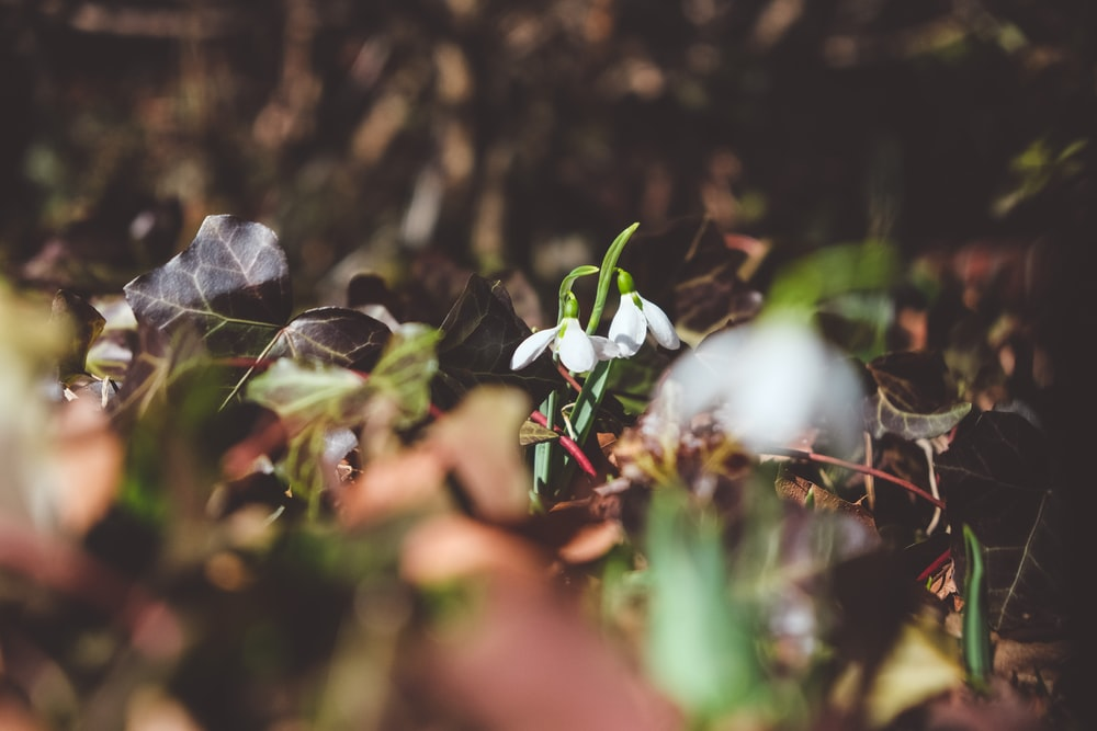 white petaled flower in close up photography