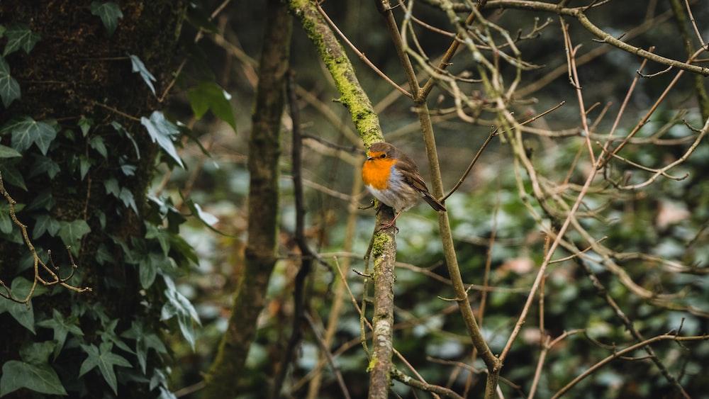 orange and black bird on tree branch during daytime