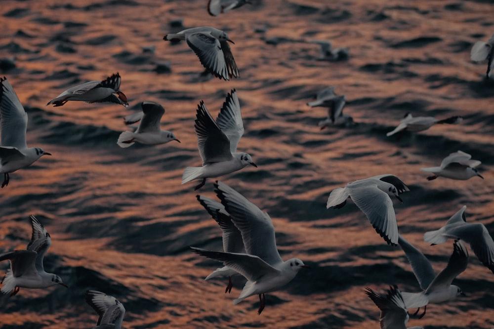 flock of gulls flying during daytime