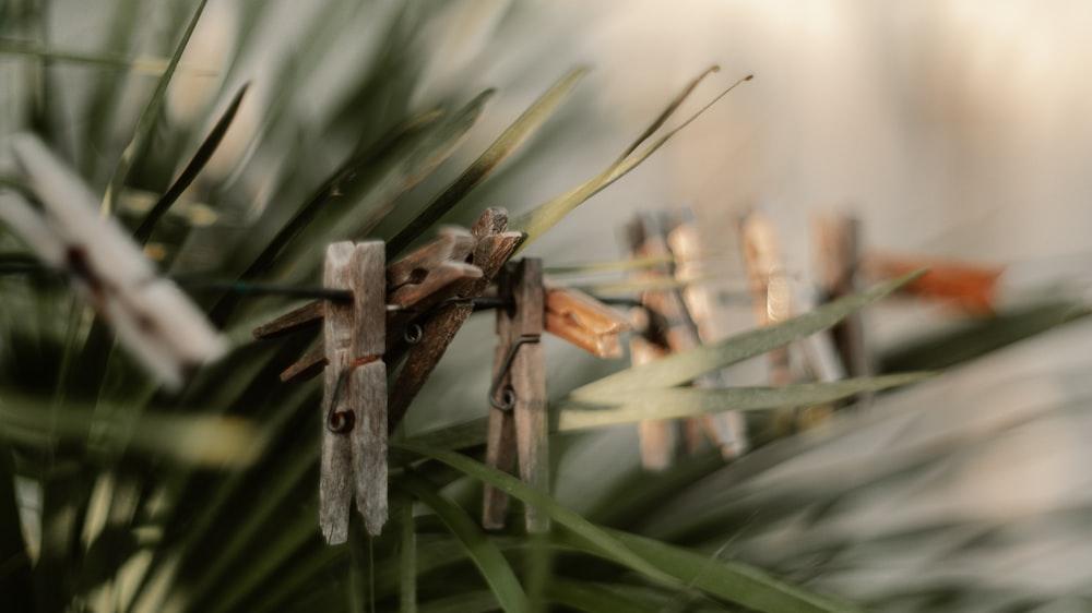 brown wooden stick on green grass