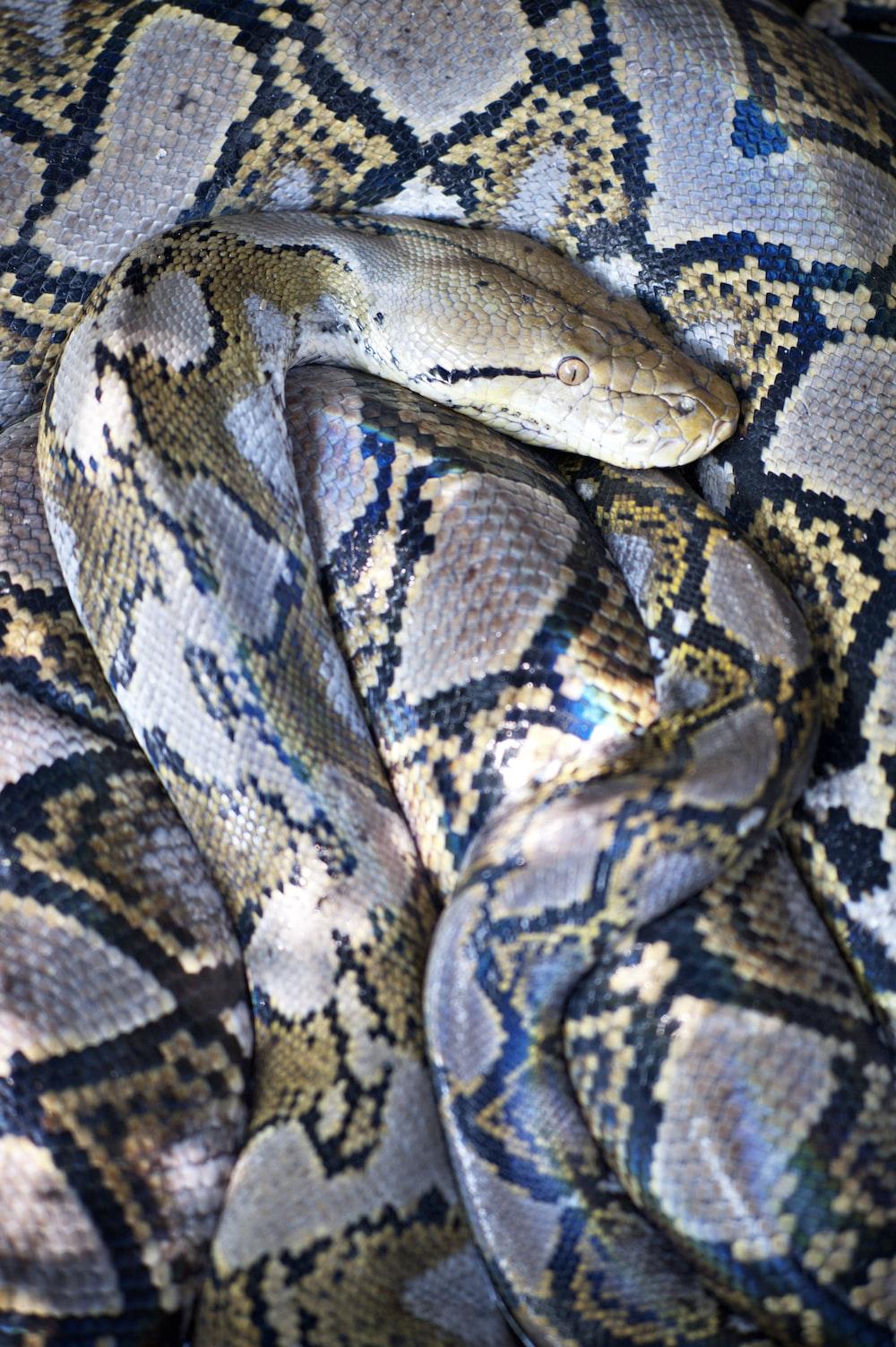 brown and black snake skin