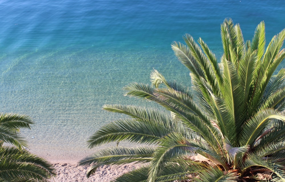 green palm tree near blue sea during daytime