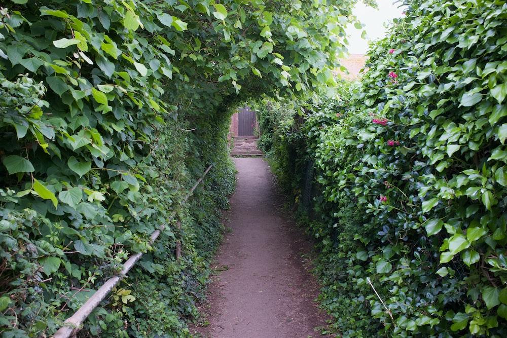 pathway between green plants during daytime