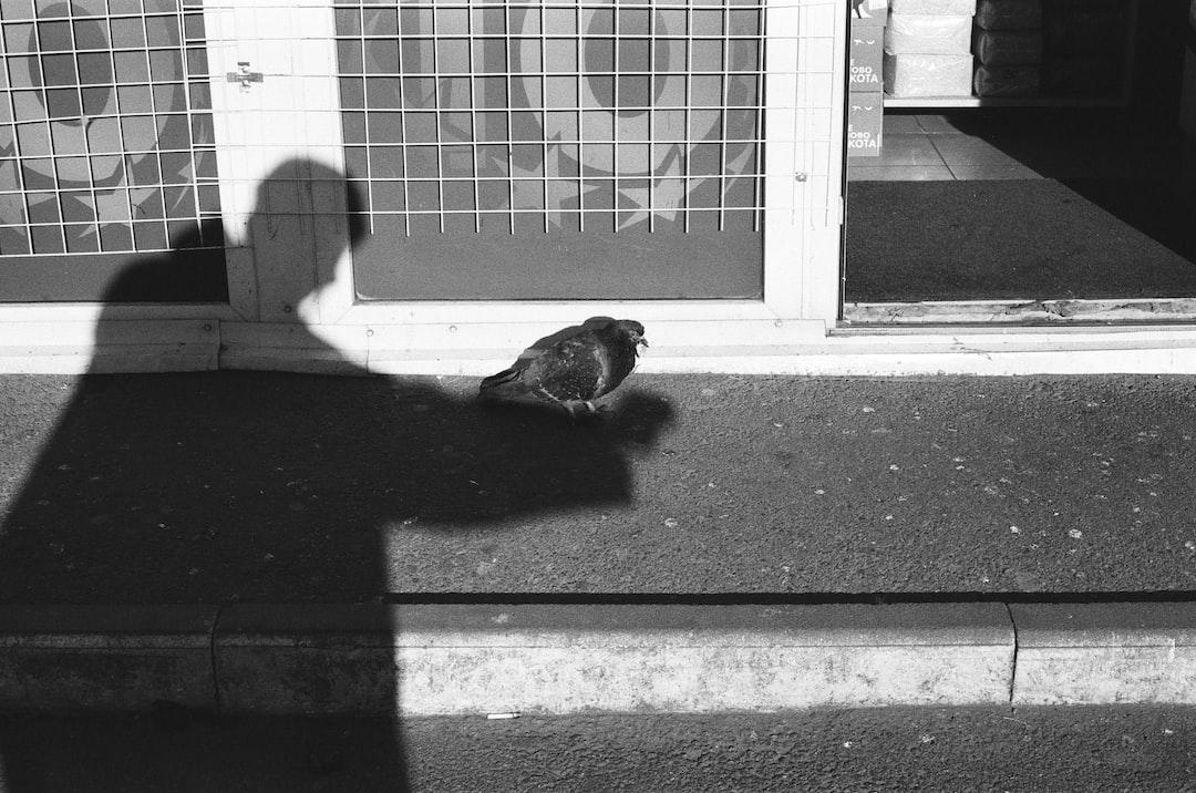 Grayscale Photo of A Bird On A Window - unsplash