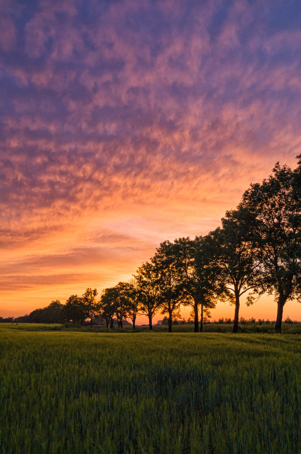green trees on green grass field during sunset