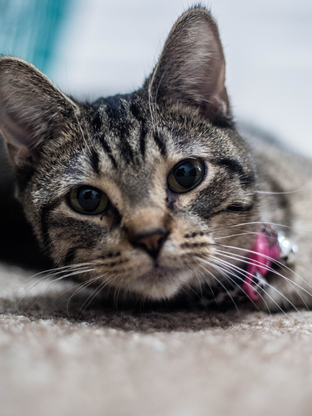 brown tabby cat on white textile