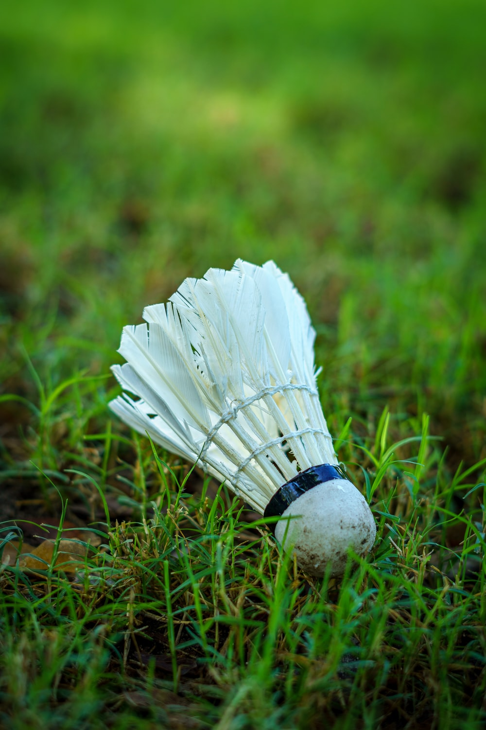 white feather on green grass